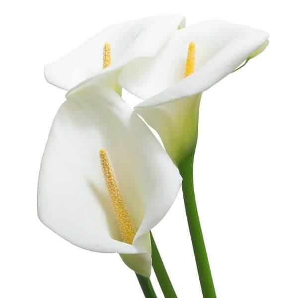 Baltos kalijos