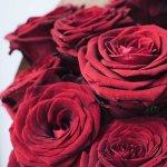 Puokštė raudonų rožių