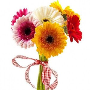 7 gerberos gėlių puokštės