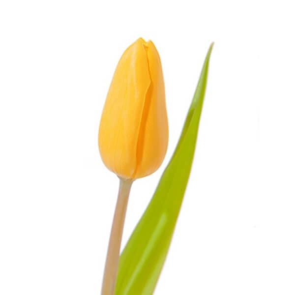 Geltona tulpė