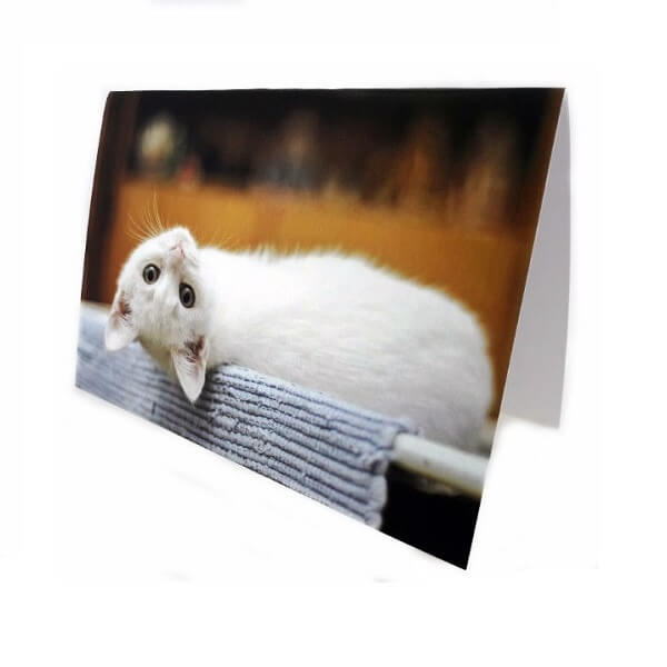 "Greeting card ""White kitty"""