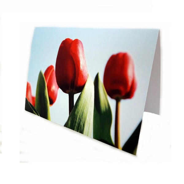 "Greeting card ""Red tulips"""