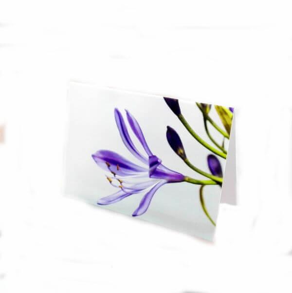 "Greeting card ""Violet blossom"""