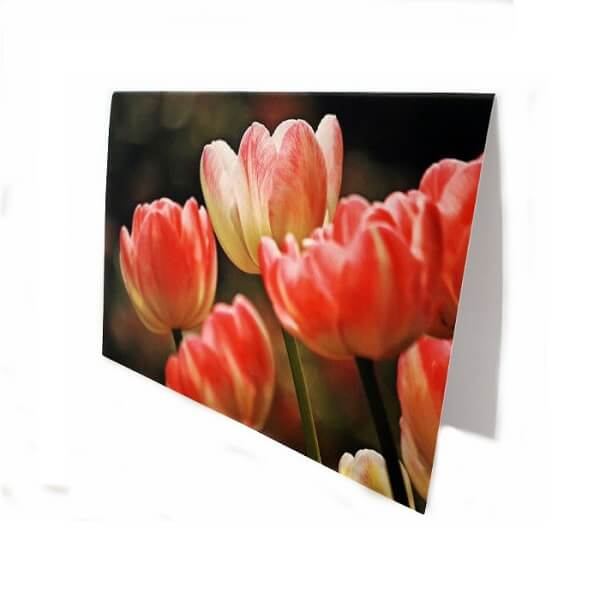 "Greeting card ""Blooming tulips"""