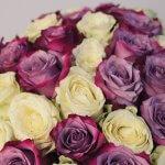 Baltos ir rožinės rožės