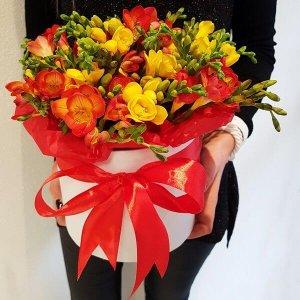 Dviejų spalvų frezijos gėlių dėžutės