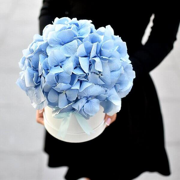 Vienos spalvos hortenzijų dėžutė