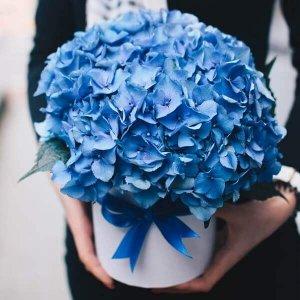 Vienspalvės hortenzijos gėlės dėžutėse