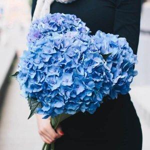 Hortenzijos gėlių puokštės