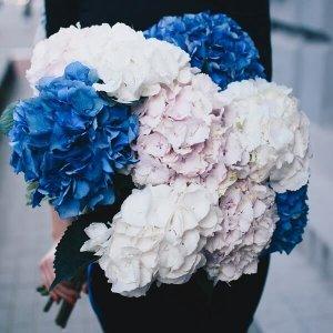 Spalvingos hortenzijos gėlių puokštė