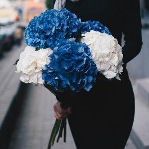 Dviejų spalvų hortenzijos gėlių puokštės