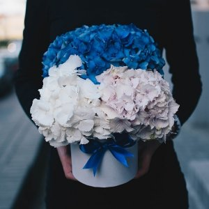 Different colors of the hydrangea box