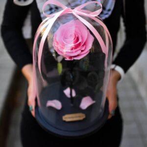 Rožinės spalvos stabilizuota rožė po stikliniu kupolu