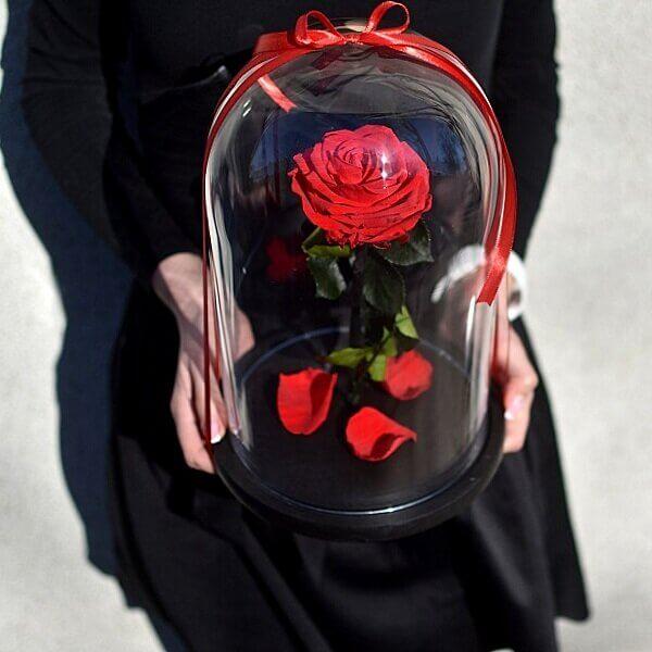 raudona mieganti rožė po gaubtu