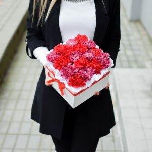 Dviejų spalvų gvazdikai gėlės dėžutėse
