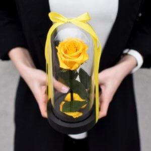Mieganti geltona maža rožė po stiklu