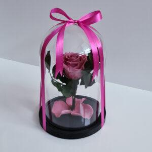Mieganti maža tamsiai rožinė rožė po stiklu