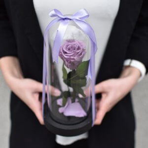 Mieganti maža alyvinė rožė po stiklu