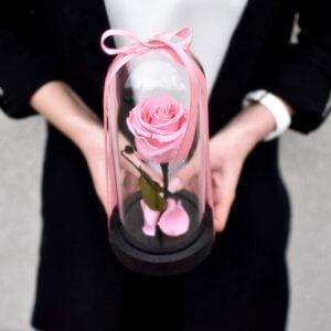 Mieganti maža rožinė rožė po stiklu