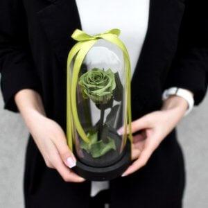 Maža žalia mieganti rožė po stiklu