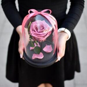 Tamsiai rožinė vidutinio dydžio stabilizuota rožė