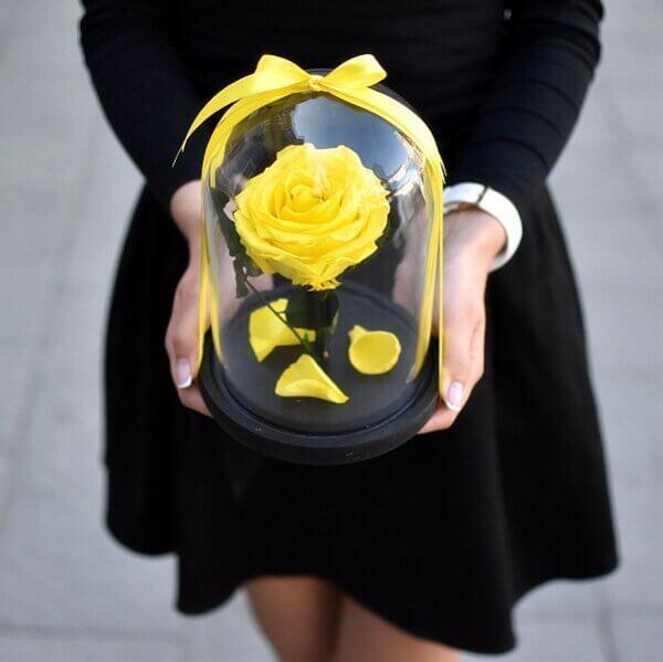 Geltona stabilizuota rožė po stiklu