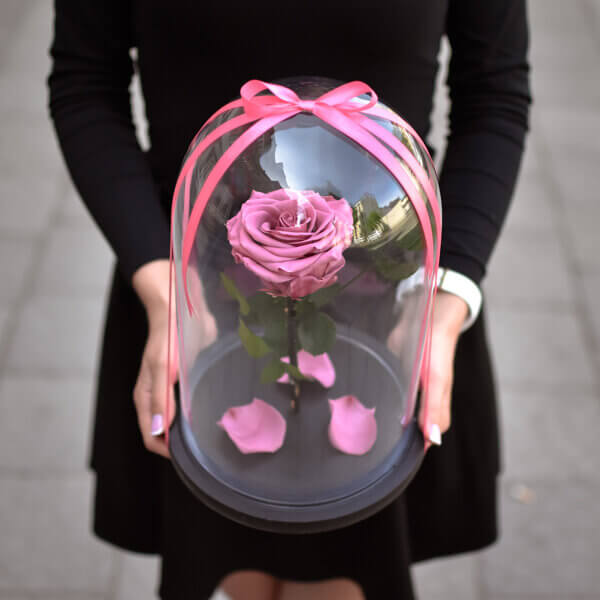 Tamsiai rožinės stabilizuota rožė po stiklu