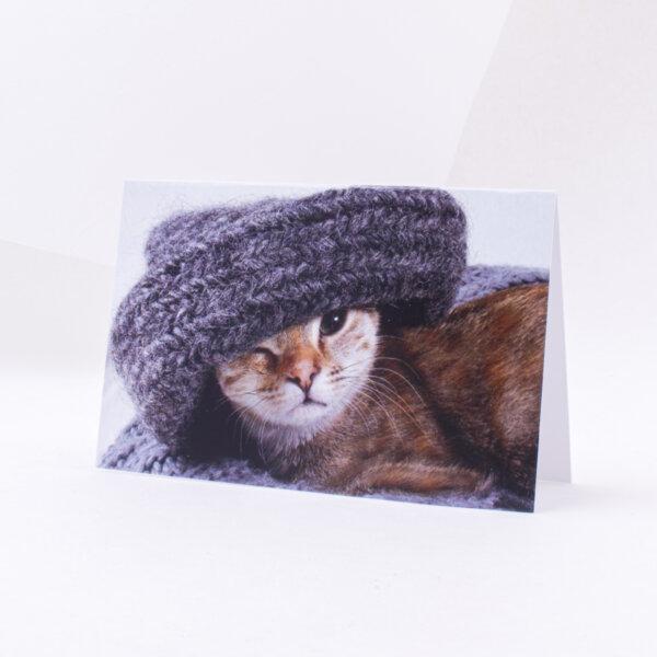 Atvirukas įvairiomis progomis mielas katinelis