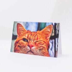 Atvirukas įvairiomis progomis katinelis su primerkta akimi