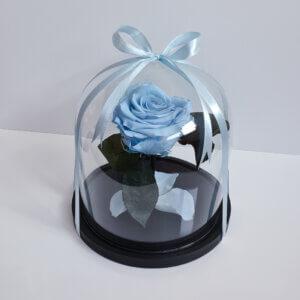 Mieganti vidutinė žydra rožė po stiklu