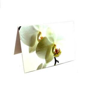 """Atvirukas """"Orchidėja"""""""